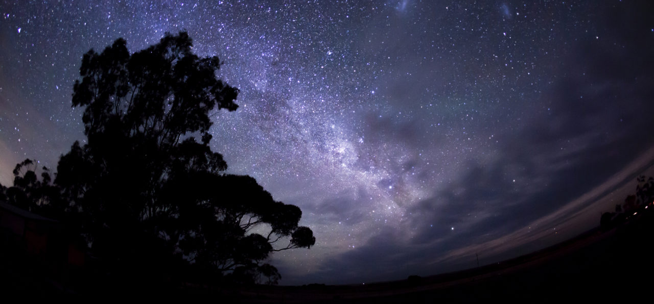 stars at night with the silhouette of a tree in the foreground